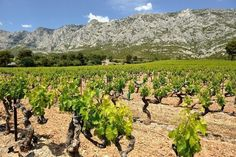 French golf breaks offer the ultimate gastronomic experience. Try Michelin-starred cuisine or cooking classes or sample wine by vineyard res Aix En Provence, Provence France, French Wine, Paris Hotels, World Traveler, Wine Cellar, Luxury Travel, Wonderful Places, Bordeaux