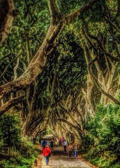 The Dark Hedges, Northern Ireland. iPhoneography, Geoff McGrath