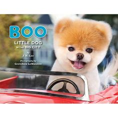Everyone's favorite dog is back and cuter than ever! Following up on the internationally bestselling Boo: The Life of the World's Cutest Dog, this latest volume features Boo's adventures in the big ci
