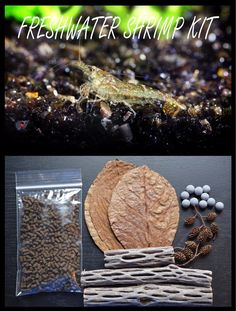 Most people who go in for mushroom growing just go out and buy both the spores (or spawn) and the growth medium. But if you are thinking of growing mushrooms commercially The Fresh, Fresh Water, Aquarium Terrarium, Planted Aquarium, Nano Aquarium, Terrarium Ideas, Shrimp And Eggs, Aquarium Accessories, Pet Accessories