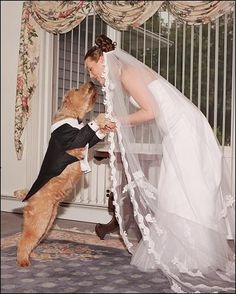 Tuxedoed dog in the wedding party. Since your dog is a member of your family, of course, you'll want him to have a prominent place in your wedding. Dog Wedding, Wedding Ceremony, Dream Wedding, Wedding Bells, Wedding Stuff, Garden Wedding, Dog Marriage, Wedding Rituals, Married Woman