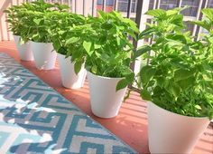Need a large planter, but don't want to spend a fortune? I hear ya! Large flower pots and planters can be costly, but trash cans aren't. Here's how to turn a cheap trash can into a gorgeous large flower pot or patio planter. Large Planters, Diy Planters, Hanging Planters, Planter Pots, White Planters, Large Flower Pots, Garden Labels, Mosaic Pots, Garden Pots