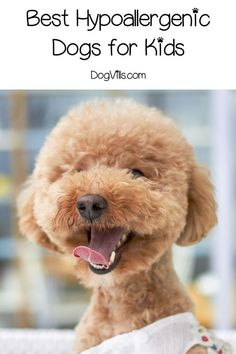 So you are looking for the best hypoallergenic dogs for kids. The good news there are a bunch of great breeds to choose from! Check out our favorites!