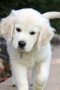 Popular Cubby Chubby Adorable Dog - 372b170cf510afb6d9fa27d9176bf2fd  Pic_924024  .jpg