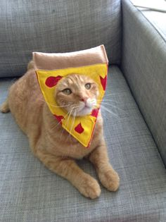 Pizza Cat Costume for Cats © by MissMaddyMakes on Etsy