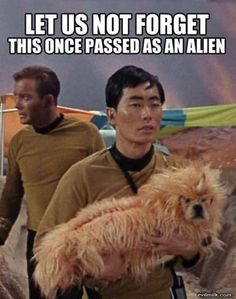 Star Trek it's... just a dog....