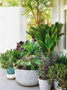 Shows the mass I'm going for, for the potted plants idea for corner outside lobby window.