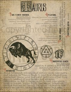 7 pages set about TAURUS Astrological Sign Correspondences. They are an ideal addition to your own Wicca Book of Shadows. Zodiac Art, Astrology Zodiac, Zodiac Signs, Astrological Sign, Tarot Astrology, Witch Spell, Tarot Spreads, Practical Magic, Book Of Shadows