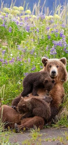 A mother's Love #by Renee Doyle #bear brown cub baby two wildlife wilderness animal nature cute