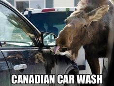 Funny pictures about Cars are washed differently in Canada. Oh, and cool pics about Cars are washed differently in Canada. Also, Cars are washed differently in Canada. Funny Car Memes, Car Humor, Funny Shit, The Funny, Funny Stuff, Funny Things, Funny Cars, Funny Quotes, Random Stuff