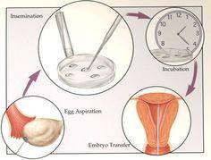 fertilization by Sanjay Kumar on 500px