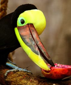 smiley beak