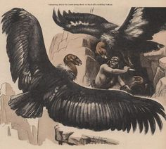 "From Boys' Life, November 1956, accompanying the J. Paul Loomis ""man vs. condors"" story Greatwing"