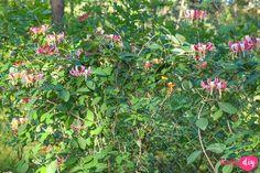 rośliny do cienia Bonsai, Diy And Crafts, Pergola, San, Inspiration, Plants, Gardening, Balcony, Biblical Inspiration