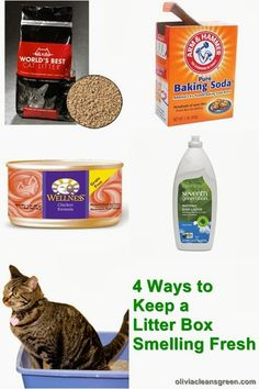 Cat Training Litter Box Olivia Lane, Health Coach: 4 Ways to Keep a Litter Box Smelling Fresh Litter Box Smell, Diy Litter Box, Best Cat Litter, Cat Care Tips, Pet Care, Cat Liter, Green Cleaning Recipes, Cleaning Hacks, Kitten Care