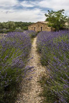 wanderthewood: Val d'Orcia, Tuscany, Italy by ssarina124 (Gypsy Purple…