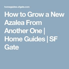 How to Grow a New Azalea From Another One | Home Guides | SF Gate