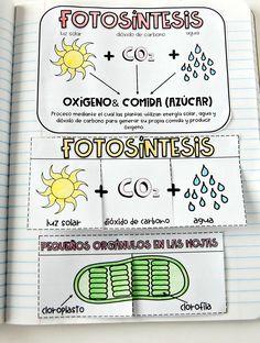 Fotosíntesis Libreta Interactiva- Plegable libreta interactiva