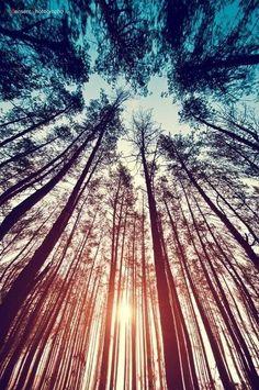 К деревьям.