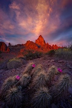 An amazing sunset in spring over the cactus gardens of southern Arizona