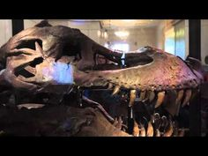 The painful life of Sue the T.rex - YouTube