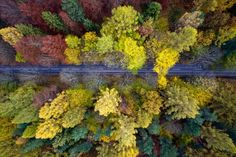 Près de la mer baltique, il existe une région célèbre pour ses vastes étendues de forêts, parsemée par des lacs et rivières sinueuses. En automne, elle se pare d'une explosion colorée, les sous-bois prennent alors tout leur éclat, mais c'est bien vu de haut que l'on peut en observer toute la beauté. - See more at: http://citizenpost.fr/decouvrez-les-splendides-cliches-aeriens-dune-foret-polonaise/#sthash.35BHZA75.dpuf
