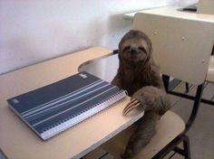 sweet sloth in a school desk