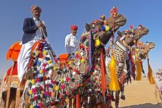 Head to India for the Bikaner Camel Festival.