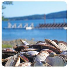 """Places To Build – Comox Valley """"Land of Plenty"""" Economic Development, Oysters, Wines, Seafood, Happenings, Places, Bucket, Shop, Sea Food"""