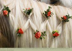 In Pferdemähne geflochtene Rosen, traditioneller Georgiritt an der Hubkapelle Penzberg, Oberbayern, Deutschland