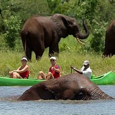 African Canoeing Safari!!! definitely another on for the bucket list!