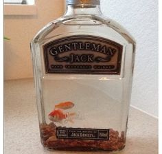 fish bowl.. gift possibility for someone who really likes a certain type of alcohol
