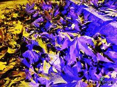 🍃🍁  #takeit #photo #photos #fametags #pic #pics #art #takepics #artist #artistic #artists #arte #dibujo #myart #artwork #color #all_shots #exposure #composition #focus #capture #classical #clean #beautiful #perfect #shiny #amazing #best #colorful #illustration