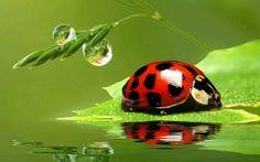 A si es la naturaleza divina en todo su explendor
