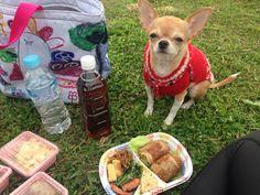 ピクニック♡