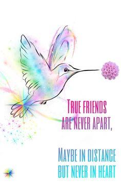 True Friends, Hummingbird, Wallpaper, Real Friends, Wallpapers, Hummingbirds, Friends