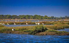 reserva natural do estuário do sado - Pesquisa Google