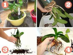 How To Keep Orchids Alive And Looking Gorgeous