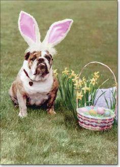 HAPPY EASTER!!! I love bulldogs