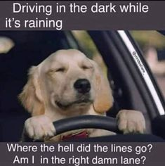 Just maybe driving in the dark was starting to get a little more difficult . Thank goodness for reverse aging! Funny Pix, Funny Dog Memes, Funny Dog Pictures, Funny Animal Memes, Animal Quotes, Funny Relatable Memes, Cat Memes, Funny Cute, Funny Dogs