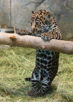 baby Leopard Amazing World beautiful amazing