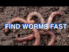 Fishing Worms, Trout Fishing, Easy Youtube