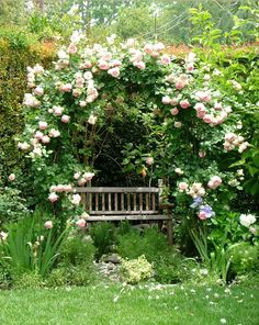 Sunday garden - Arch and roses