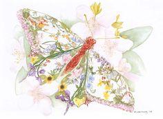 sun_valley_butterfly_1024.jpg (1024×752)
