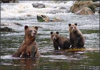 Palmerville Adventures | Khutzeymateen Grizzly Bear Tours in Prince Rupert, British Columbia