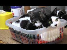 ミャミオ君&ビビちゃん!猫動画、猫画像,cat video,Kitten video,Cats and Kittens,cat25,猫ニャーゴ - YouTube