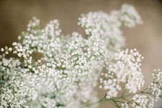 16 Inexpensive Wedding Flowers That Still Look Beautiful For Couples On A Tight Budget wedding flowers 16 Inexpensive Wedding Flowers For Tight Budgets Wedding On A Budget, Low Cost Wedding, Wedding Costs, Wedding Tips, Wedding Planning, Wedding Stuff, Dream Wedding, Wedding Shoes, Wedding Menu