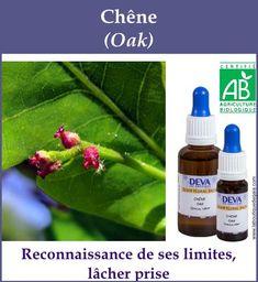 Chene 5 Gaia, Elixir Floral, Agriculture Biologique, Boutique, Soap, Personal Care, Bottle, Flowers, Beauty
