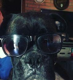Rocco  #Boxer #Atigrado