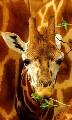 baby giraffe.. ( by Rina Thompson Photography)